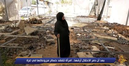 بعد أن دمر الاحتلال أرضها امرأة تتفقد خسائر مزروعاتها في غزة