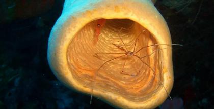 اكتشاف أقدم حيوان على وجه الأرض